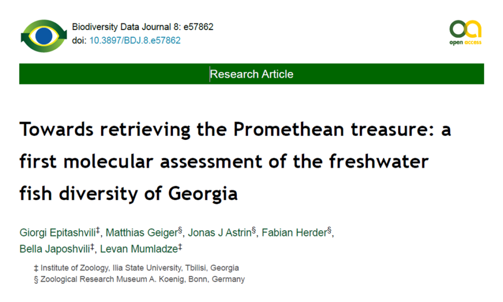 A first molecular assessment of the freshwater fish diversity of Georgia